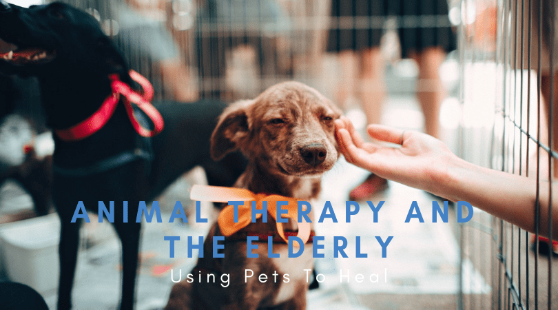 Animal Therapy and the Elderly